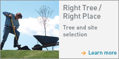 Right Tree Right Plac