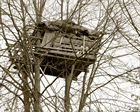 Tree-house Photograph