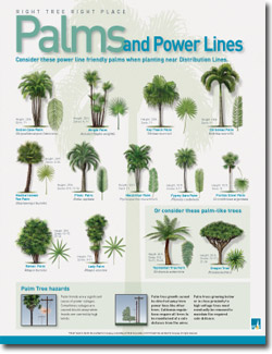 Power Line Friendly Palms