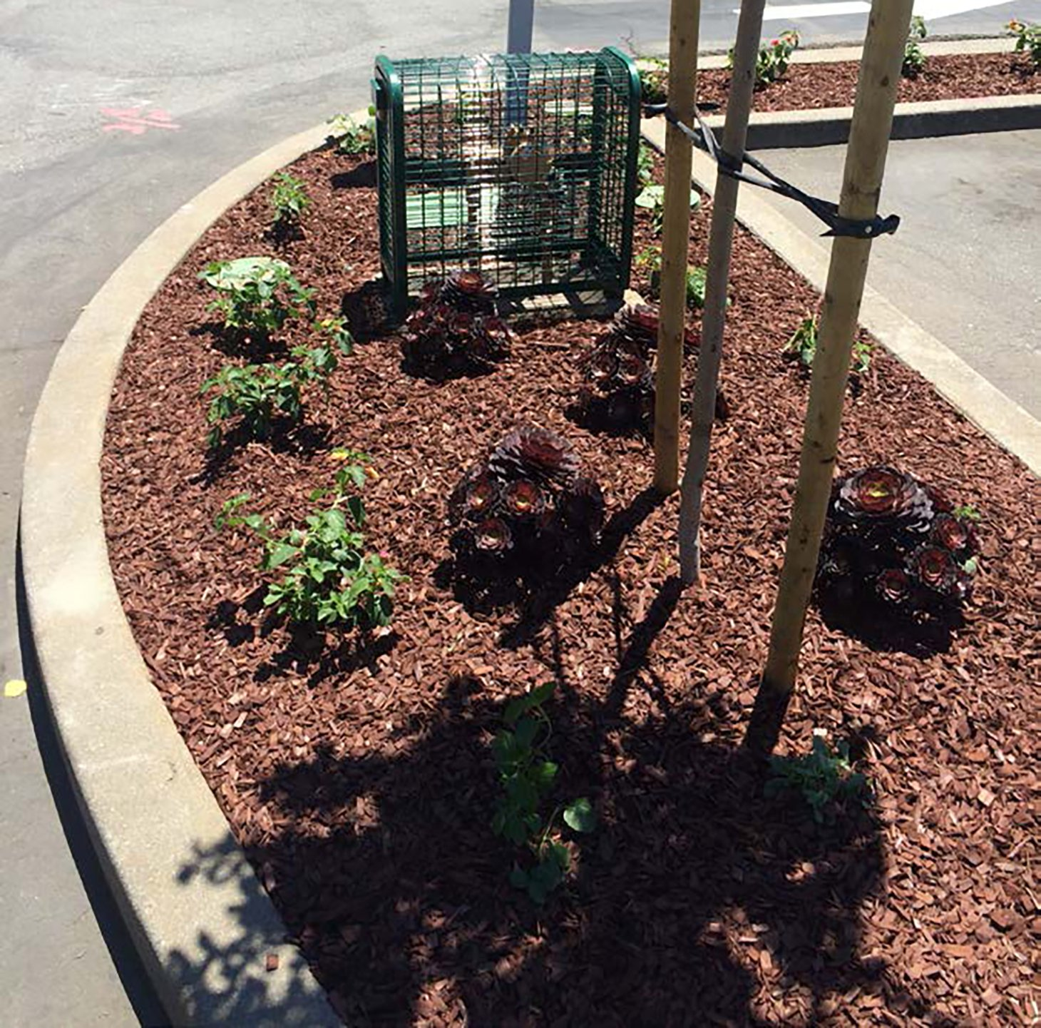 PG&E restored planter areas upon completion of cleanup activities.
