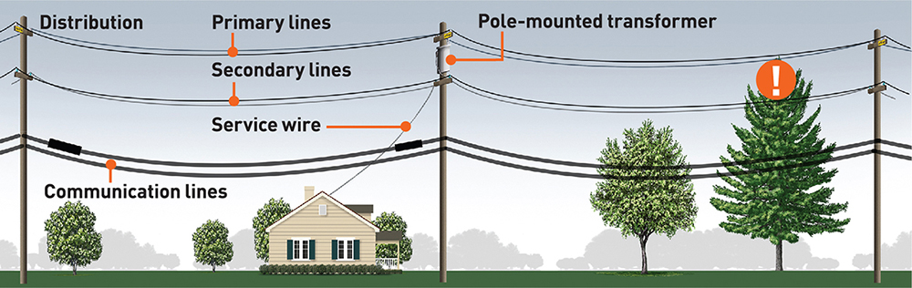 Graphic of power lines near trees