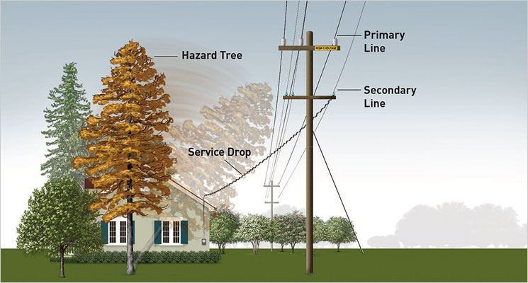 Pruning trees next to high voltage power lines is extremely dangerous. Only people who receive special training are permitted to work within 10 feet of lines according to the California Occupational Safety and Health Administration (Cal/OSHA).