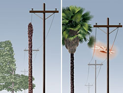 Palm Tree and Electric Pole Poster