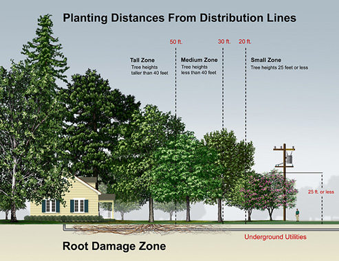 Planting Distances From Distribution Lines