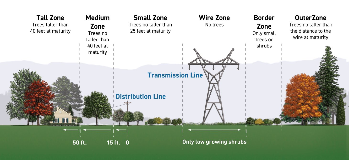 Near power distribution towers, plant trees that will grow no taller than 25 feet. Under power lines, plant low-growing shrubs. Along transmission line right-of-ways, plant only small trees or shrubs no taller than 10 feet.
