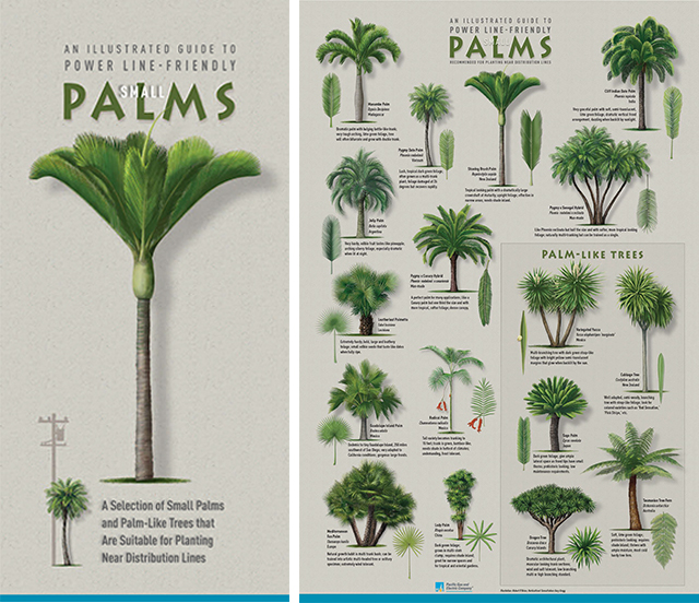 Review our guide to small palms