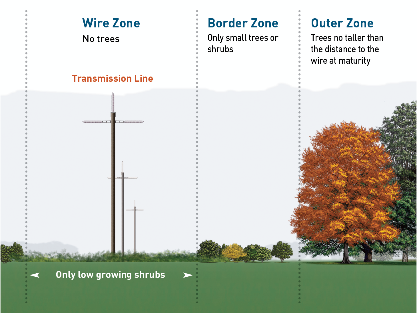 Planting guidelines near distribution lines: In the wire zone, use only low-growing shrubs.