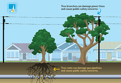 Tree branches can damage powerlines and cause public safety concerns. Tree roots can damage gas pipelines and cause public safety concerns.