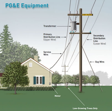 Questions About Trees And Power Lines